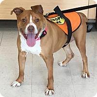 Adopt A Pet :: Valentina - Cherry Valley, NY