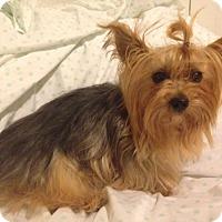 Adopt A Pet :: Wendy - Ashland City, TN