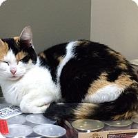 Adopt A Pet :: Furiosa - Byron Center, MI
