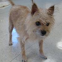 Adopt A Pet :: Bristol - Rosalia, KS