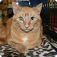 Adopt A Pet :: Nugget - Rochester, MN