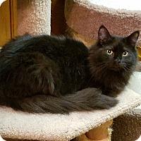 Adopt A Pet :: Cole - Jeannette, PA