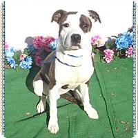 Adopt A Pet :: RUGBY - Marietta, GA