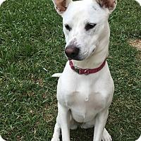 Adopt A Pet :: Nikki - New Braunfels, TX