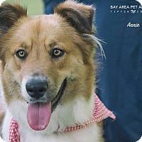 Adopt A Pet :: Annie - San Leon, TX