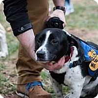 Adopt A Pet :: Jacob (Has Application) - Washington, DC