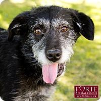 Adopt A Pet :: Stanley - Marina del Rey, CA