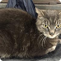 Adopt A Pet :: Steve - Warren, MI