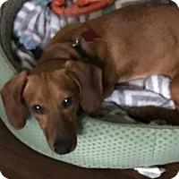 Adopt A Pet :: Hunter - Pearland, TX