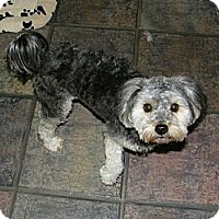 Adopt A Pet :: Candy - South Amboy, NJ