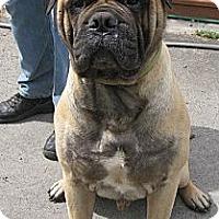 Adopt A Pet :: Stanley - Roy, WA