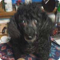 Adopt A Pet :: Lucy - North Benton, OH