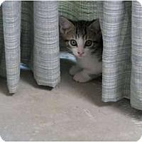 Adopt A Pet :: Jack - Port Republic, MD
