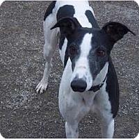 Adopt A Pet :: Sim - Roanoke, VA