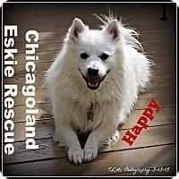 Adopt A Pet :: Happy - Elmhurst, IL
