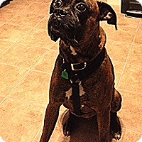 Adopt A Pet :: Morris - Sunderland, MA