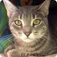 Adopt A Pet :: Emma - Porter, TX