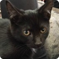 Adopt A Pet :: Spell - McHenry, IL