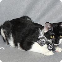 Adopt A Pet :: Chrissy - Kerrville, TX