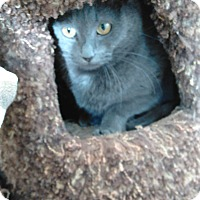 Adopt A Pet :: Spagetti - Cloquet, MN