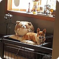 Adopt A Pet :: Betsy - Freeport, NY