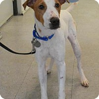 Adopt A Pet :: Ringo - Freeport, IL