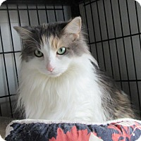 Adopt A Pet :: Marcy - Glenwood, MN