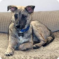 Adopt A Pet :: Kingsley (IL) - Hooksett, NH