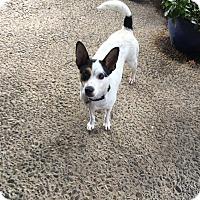Adopt A Pet :: Anakin - Lodi, CA