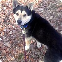 Adopt A Pet :: Murphy - Franklin, IN