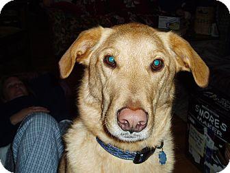 Labrador Retriever Mix Dog for adoption in Richmond, Virginia - Obi