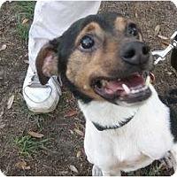 Adopt A Pet :: Logan - Orange Park, FL