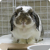 Adopt A Pet :: Smores - North Gower, ON