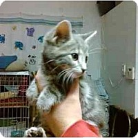 Adopt A Pet :: Mistletoe - Erie, PA