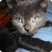 Adopt A Pet :: Auguste (Gus) - Norwich, NY