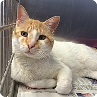 Adopt A Pet :: Charles - East Brunswick, NJ