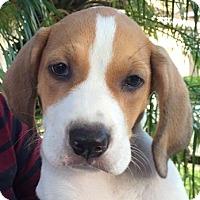 Adopt A Pet :: Grandview#1M - Orlando, FL