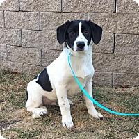 Adopt A Pet :: Al is in Rhode Island! - Harrisonburg, VA