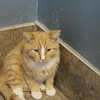 Adopt A Pet :: Tang - West Des Moines, IA