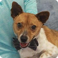 Adopt A Pet :: Rookie - Garfield Heights, OH