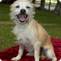 Adopt A Pet :: Millie Sweet Girl--N - Santa Fe, TX
