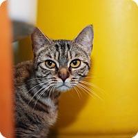 Adopt A Pet :: Maggie - Brimfield, MA