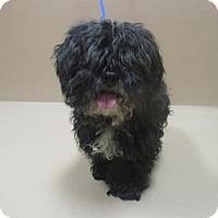 Adopt A Pet :: Sparkles - Reno, NV