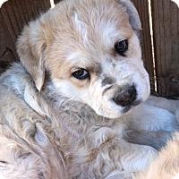 Adopt A Pet :: Wriggly - Crestline, CA