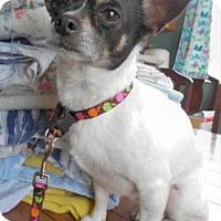 Adopt A Pet :: Bandit - Waupaca, WI