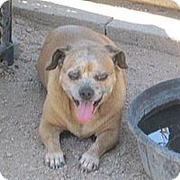 Adopt A Pet :: Baby Girl - Dodge City, KS