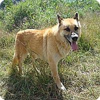 Adopt A Pet :: King - Redmond, WA
