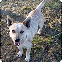 Adopt A Pet :: Otis - Siler City, NC