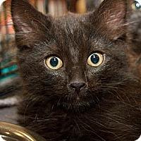 Adopt A Pet :: Ajani - Irvine, CA