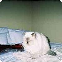 Adopt A Pet :: Minerva - Scottsdale, AZ
